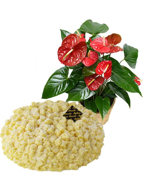 torta mimosa con pianta di anthurium